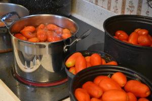 San Marzano and Roma tomatoes